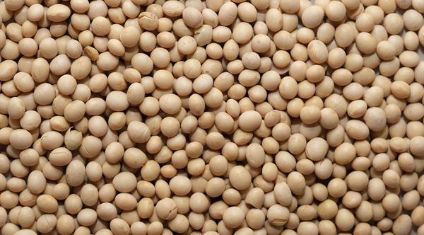 peterson soy beans